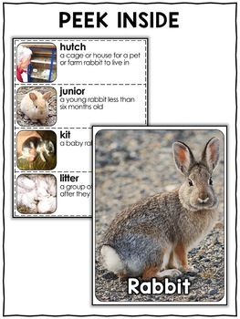 Rabbit Activities Nonfiction Unit