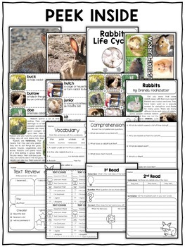 Rabbit Activities Nonfiction Unit