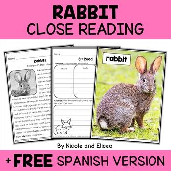 Close Reading Passage - Rabbit Activities