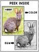 Close Reading Rabbit Activities