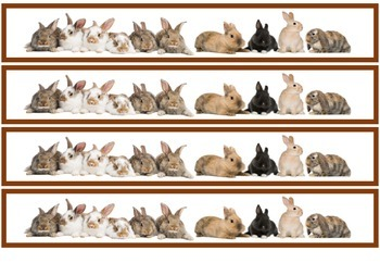 Rabbits Border