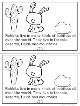 Rabbits For Primary K-2