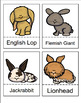 Rabbits, Rabbits and More Rabbits by Gail Gibbons Book Unit