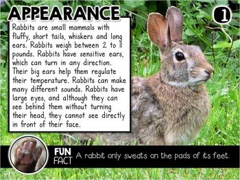Rabbits Nonfiction Reading