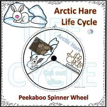 Rabbits and Hares Life Cycle Spinner Bundle