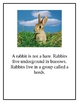 Rabbits and Hares Nonfiction Science, Literacy, Math