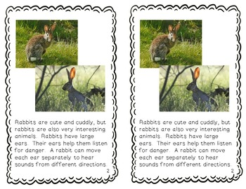 Rabbits - differentiated non-fiction student readers