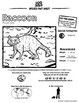 Raccoon -- 10 Resources -- Coloring Pages, Reading & Activities