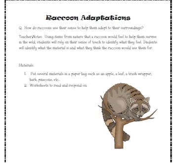 Raccoon Adaptations - Sense of Touch