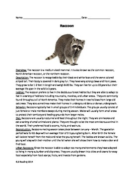Raccoon Article - Review Questions Vocabulary Word Search