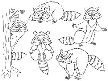 Raccoon Clipart - Digital Vector Animal, Raccoons, Raccoon Clip Art