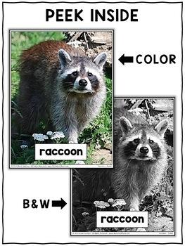 Raccoon Close Reading Passage Activities