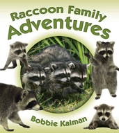 Raccoon Family Adventures