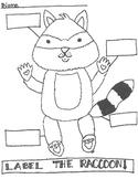 Raccoon Labeling Worksheet