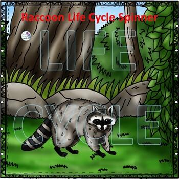 Raccoon (Life Cycle Spinner)