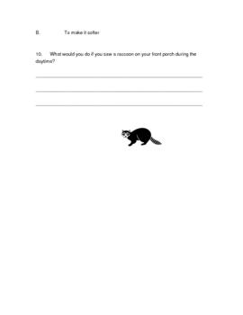 Raccoon Quiz