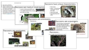 Raccoon Research Bundle