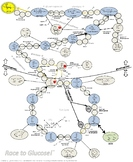 Glucose Metabolism Game for Biology or Biochemistry Courses