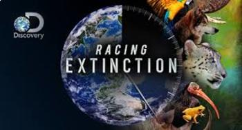 Racing Extinction Documentary Viewing Guide Discovery Channel
