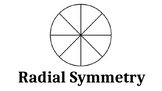 Radial Symmetry Turkey