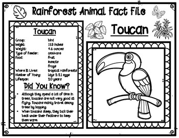 Rainforest Animal & Insect Fact Files
