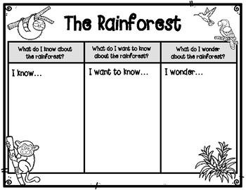 Rainforest Differentiated Prior Knowledge Graphic Organizer