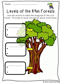 Rain Forest Differentiated Reading Comprehension Activity Pack