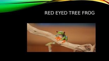 Rain Forest Habitat: Animal Adaptations