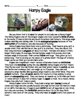 Rain Forest Harpy Eagle Team Project