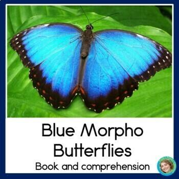 Rainforest Readers: Blue Morpho Butterfly