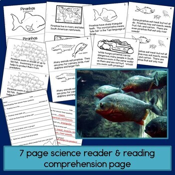 Rainforest Readers: Piranhas Guided Reading Book