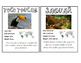 Rain forest Animal Cards