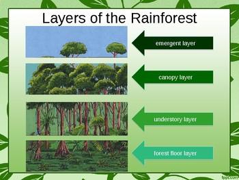 Rain forest Power Point