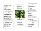 Rain forest theme web Preschool