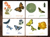 Rainbow Color-Word Flashcards, Vintage Garden Life Images,