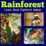 Rainforest Animals | Kindergarten 1st 2nd 3rd 4th 5th Grad