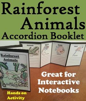 Rainforest Animals Activity
