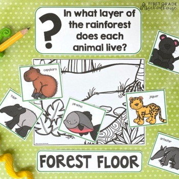 rainforest layers and animals by first grade schoolhouse tpt. Black Bedroom Furniture Sets. Home Design Ideas