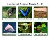 Rainforest Animal Cards