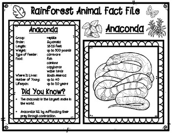 Rainforest Animal Fact Files and Research Graphic Organizer