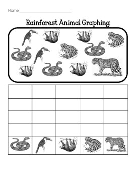 Rainforest Animal Graphing