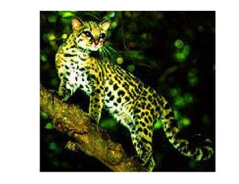 Rainforest Animal Information