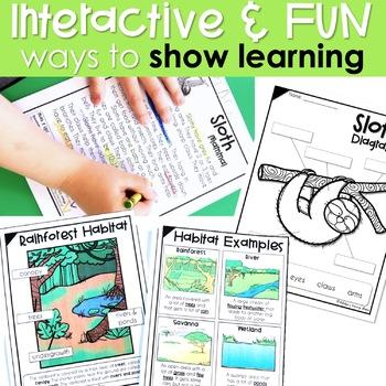 Rainforest Animal Research