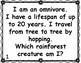 Rainforest Animal Riddles