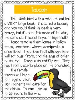 Rainforest Animals - A First Grade Literacy Center