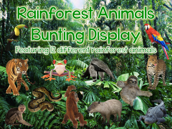 Habitats: Rainforest Animals Bunting Display