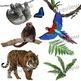 Rainforest Animals Clip Art