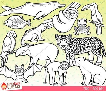 Rainforest Animals Clipart