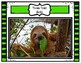 Rainforest Animals Gallery Walk Pair and Share Activity