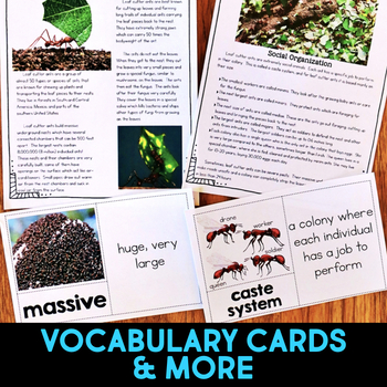 Rainforest Animals: Informational Article, QR Code Research Page & Fact Sort